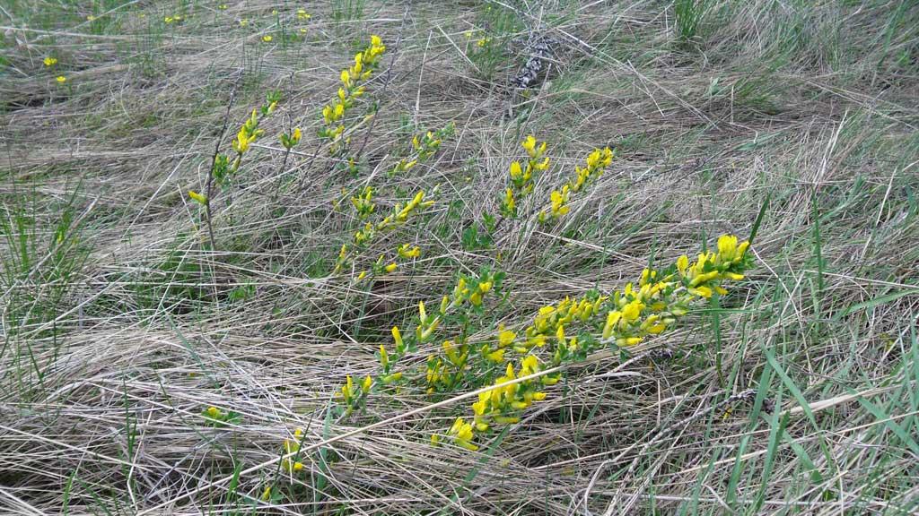 растительность Дивногорья