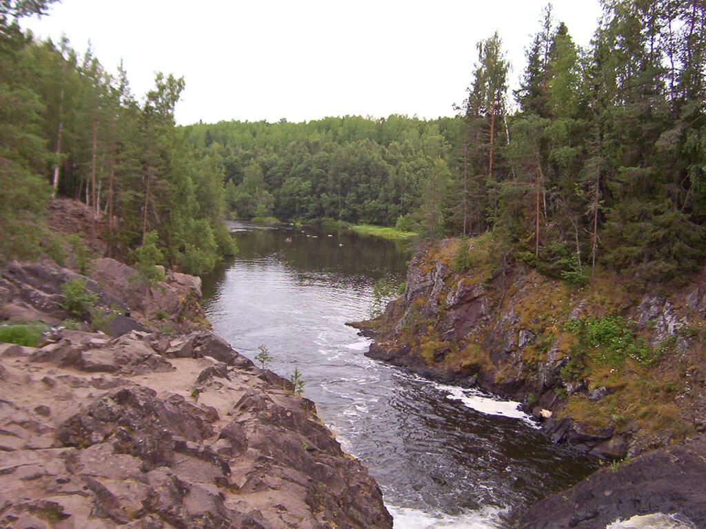 лес по берегам реки